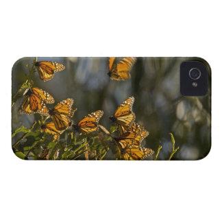 USA, California, San Luis Obispo County. Monarch Case-Mate iPhone 4 Cases