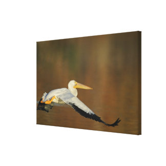 USA, California, Santee Lakes Park. White Canvas Print