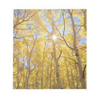 USA, California, Sierra Nevada Mountains. Fall Notepad