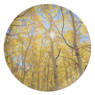 USA, California, Sierra Nevada Mountains. Fall Plate