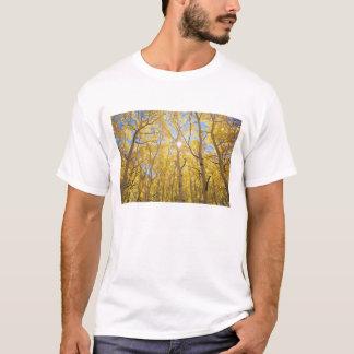USA, California, Sierra Nevada Mountains. Fall T-Shirt