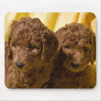 USA, California. Standard Poodle Puppies Mouse Mat