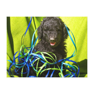 USA, California. Standard Poodle Puppy Sitting Canvas Print