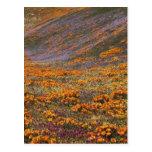 USA, California, Tehachapi Mountains, 2 Post Card