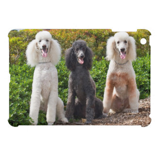 USA, California. Three Standard Poodles Sitting 2 Case For The iPad Mini
