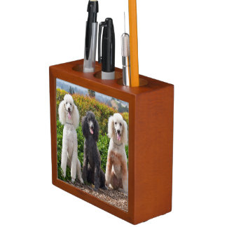 USA, California. Three Standard Poodles Sitting 2 Desk Organiser