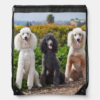 USA, California. Three Standard Poodles Sitting 2 Drawstring Bag