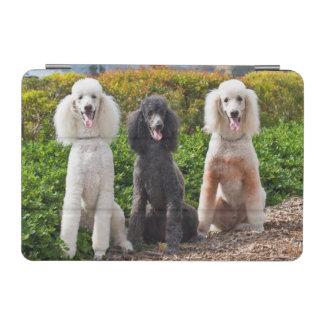 USA, California. Three Standard Poodles Sitting 2 iPad Mini Cover