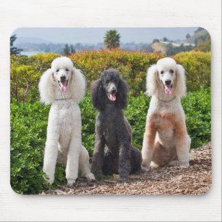 USA, California. Three Standard Poodles Sitting 2 Mouse Mat