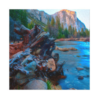 USA, California. Tree Roots In Merced River Gallery Wrap Canvas