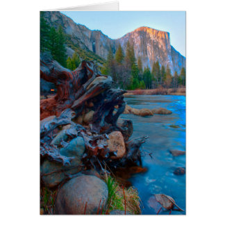 USA, California. Tree Roots In Merced River Card