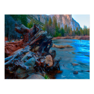 USA, California. Tree Roots In Merced River Postcard