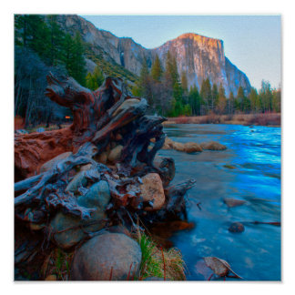 USA, California. Tree Roots In Merced River Poster