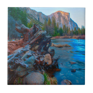 USA, California. Tree Roots In Merced River Tile