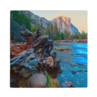 USA, California. Tree Roots In Merced River Wood Coaster