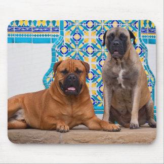 USA, California. Two Mastiffs Looking At You Mouse Mat