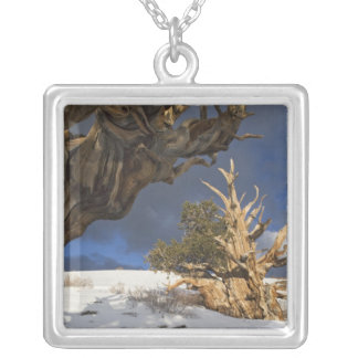 USA, California, White Mountains. Ancient Silver Plated Necklace