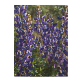 USA, California. Wildflower Bloom Close Up Wood Wall Decor