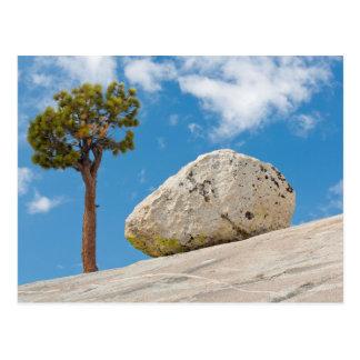 USA, California, Yosemite National Park. Pine Postcard