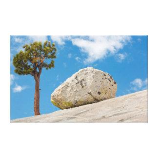 USA, California, Yosemite National Park. Pine Stretched Canvas Print