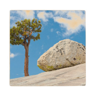 USA, California, Yosemite National Park. Pine Wood Coaster