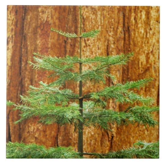 USA, California, Yosemite National Park. Young Large Square Tile