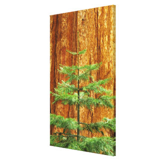 USA, California, Yosemite National Park. Young Stretched Canvas Prints