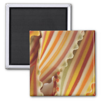 USA. Close-up of dried rainbow pasta noodles. Square Magnet