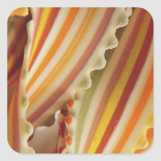 USA. Close-up of dried rainbow pasta noodles. Square Sticker
