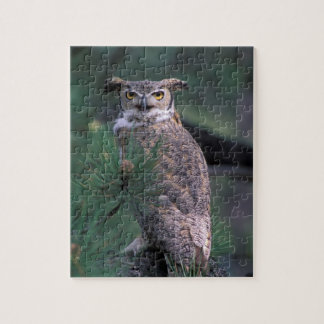 USA, CO, Colorado Springs. Great Horned Owl in Jigsaw Puzzle