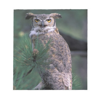 USA, CO, Colorado Springs. Great Horned Owl in Notepad