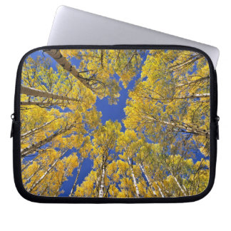 USA, Colorado, Aspen area. Aspen forest in fall Laptop Sleeve