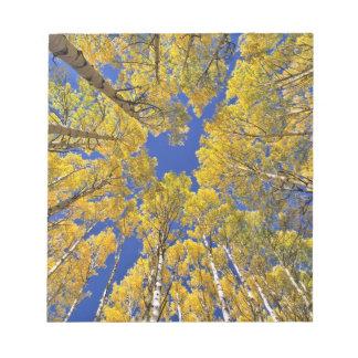 USA, Colorado, Aspen area. Aspen forest in fall Notepad