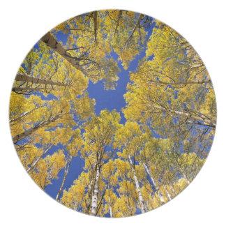 USA, Colorado, Aspen area. Aspen forest in fall Plate