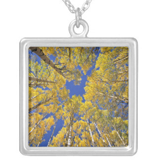 USA, Colorado, Aspen area. Aspen forest in fall Silver Plated Necklace