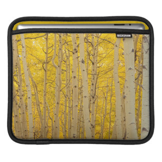 USA, Colorado. Aspens In Gunnison National iPad Sleeve