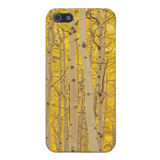 USA, Colorado. Aspens In Gunnison National iPhone 5 Cases