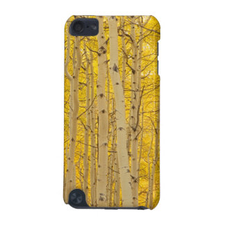 USA, Colorado. Aspens In Gunnison National iPod Touch 5G Cases