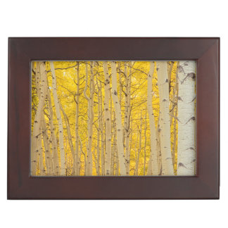 USA, Colorado. Aspens In Gunnison National Keepsake Box