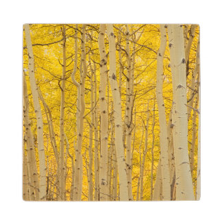 USA, Colorado. Aspens In Gunnison National Wood Coaster