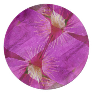 USA, Colorado, Boulder. Clematis flower montage Dinner Plates
