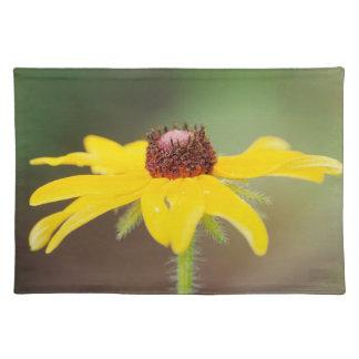 USA, Colorado, Boulder. Sunflower close-up Placemat