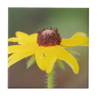 USA, Colorado, Boulder. Sunflower close-up Tile