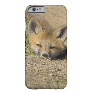 USA, Colorado, Breckenridge. Alert red fox Barely There iPhone 6 Case