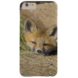 USA, Colorado, Breckenridge. Alert red fox Barely There iPhone 6 Plus Case
