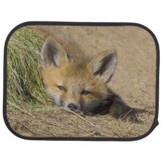 USA, Colorado, Breckenridge. Alert red fox Car Mat