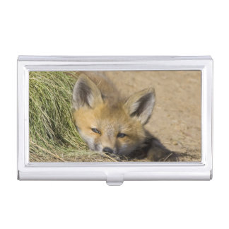 USA, Colorado, Breckenridge. Alert red fox Case For Business Cards
