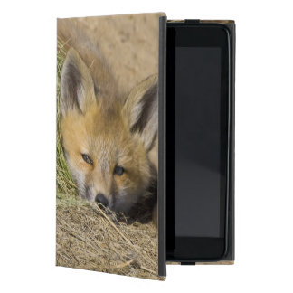 USA, Colorado, Breckenridge. Alert red fox Cover For iPad Mini