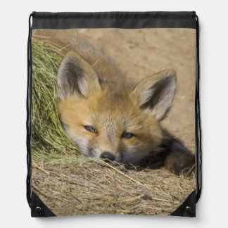 USA, Colorado, Breckenridge. Alert red fox Drawstring Bag