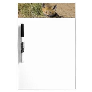 USA, Colorado, Breckenridge. Alert red fox Dry Erase Board